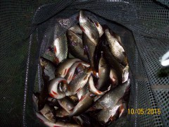 Carl Chadwick's net of Roach and Perch from Settler Dam (1)