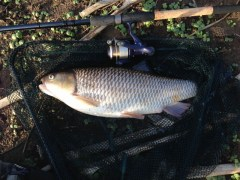 Chub-from-Goldsboro-Feb-14