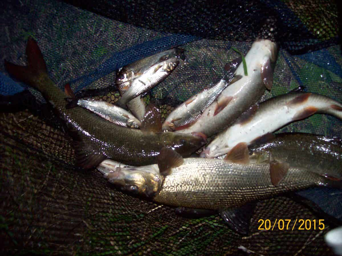 Aire Barbel and Silvers