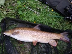 9lb Barbel, Boston Spa, 18-06-15