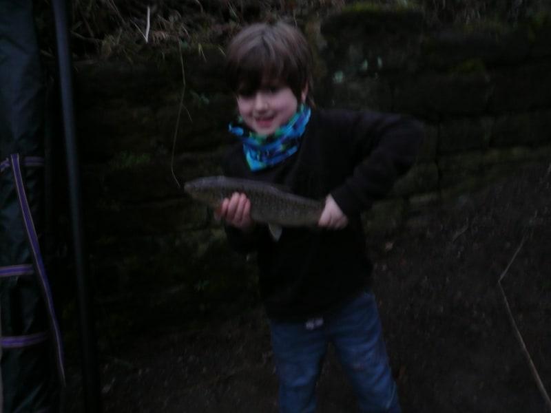 River Aire trout