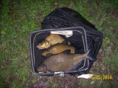 Tench and bream, Coppice Pond, Bingley, Bingley Angling Club
